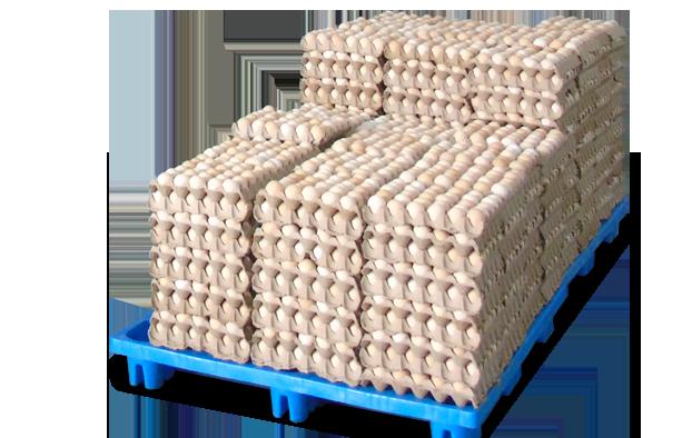 鸡蛋(图1)